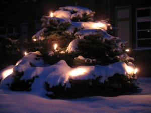 snowy-christmas-tree-1339568-640x480